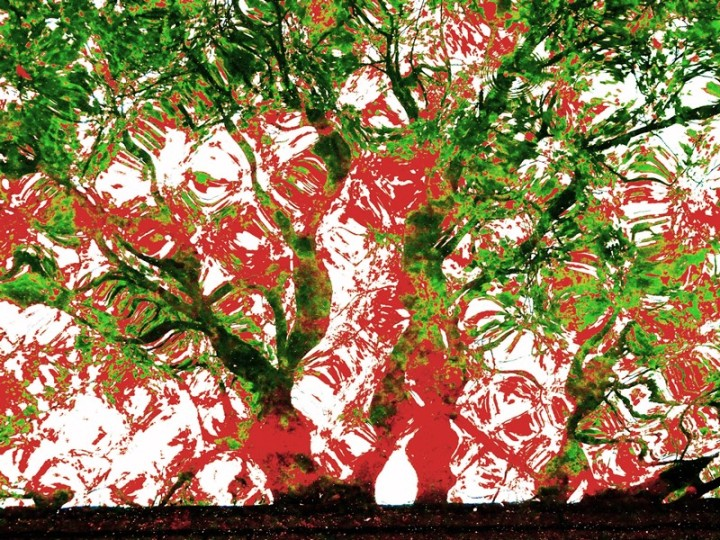 MoArt Tree Magic 136-C