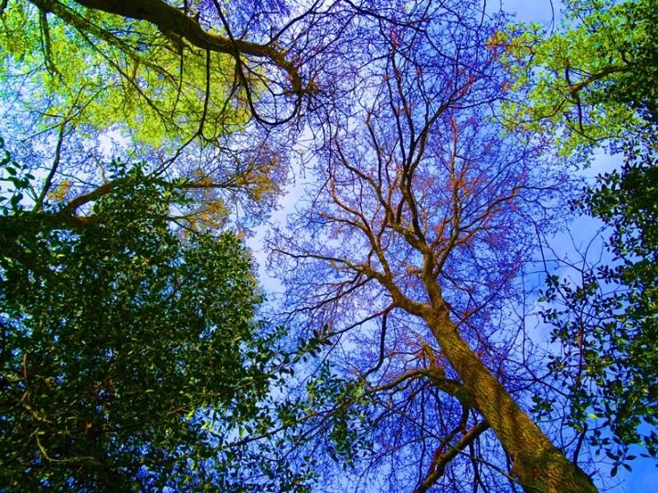 Diversi-Tree