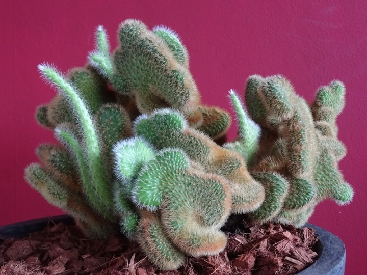 MoArt kamerplant - SciFi Cactus 1-10