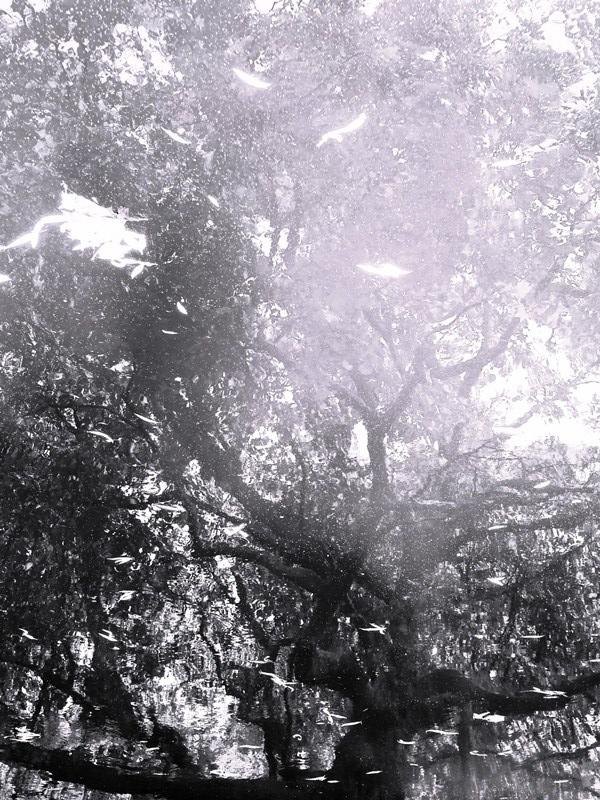 MoArt Tree Magic 192-B small