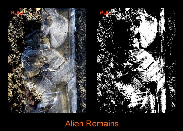 MoArt - Alien Remains Diptych